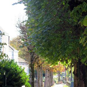 arboriculture urbaine
